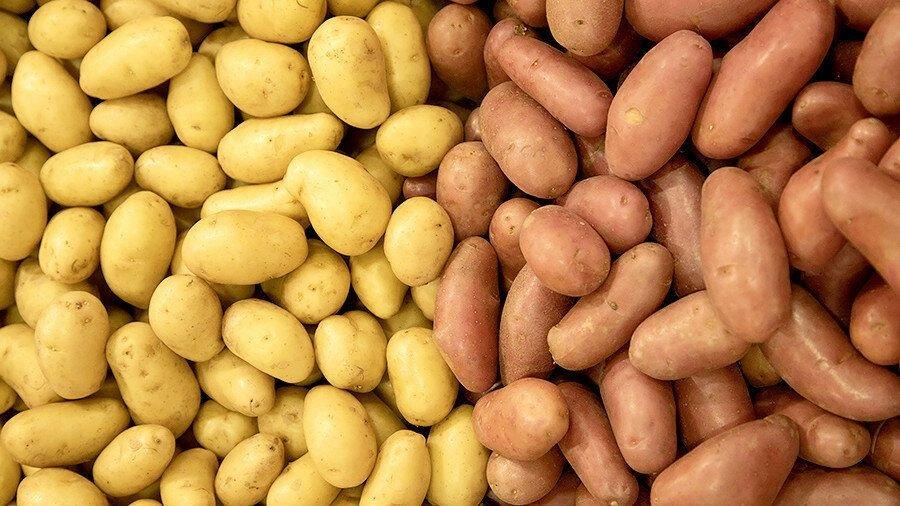 Какую картошку лучше всего жарить?