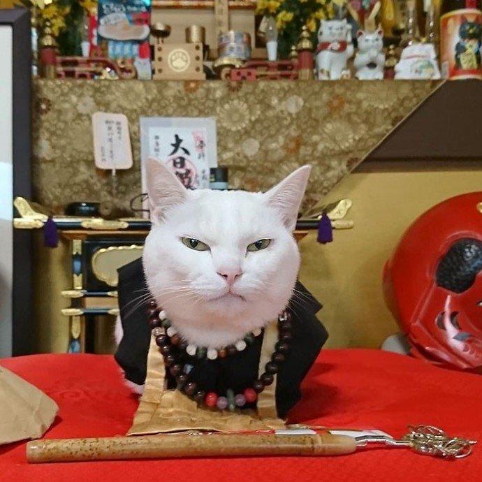 Фотографии японского храма, в котором поколениями живут коты-монахи
