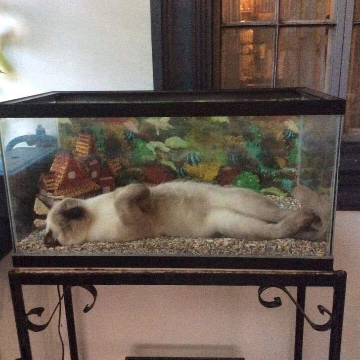 © CatsSleepingInAwkwardPositions / Facebook, © ajfoucault / Reddit
