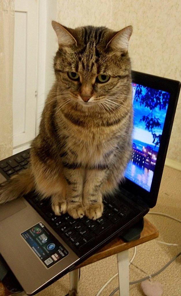 Фотографии которые дают понять, что значит жить с котом