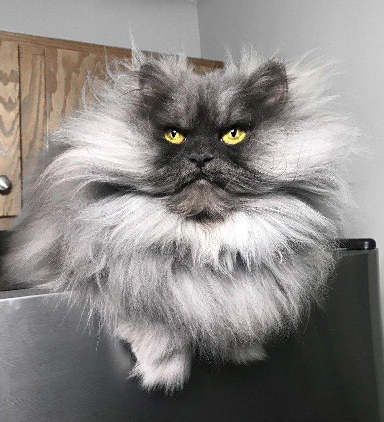 Знакомьтесь, злюка Джуно — самый зловещий кот в Сети