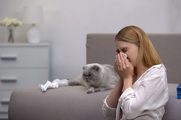 Какую кошку выбрать аллергикам?