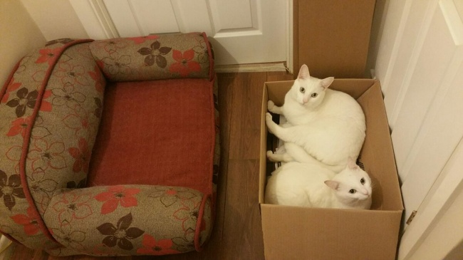Этих котов просто нельзя было не сфотографировать ))