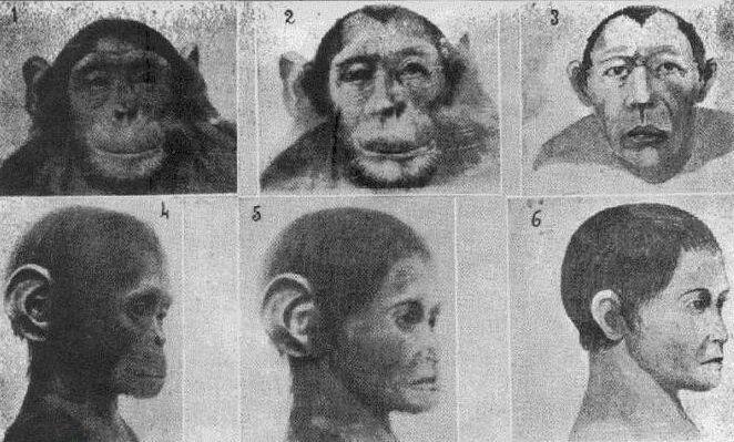 Эскизы гибрида человека и обезьяны из журнала исследований Ильи Иванова. Источник изображения: spiegel.de