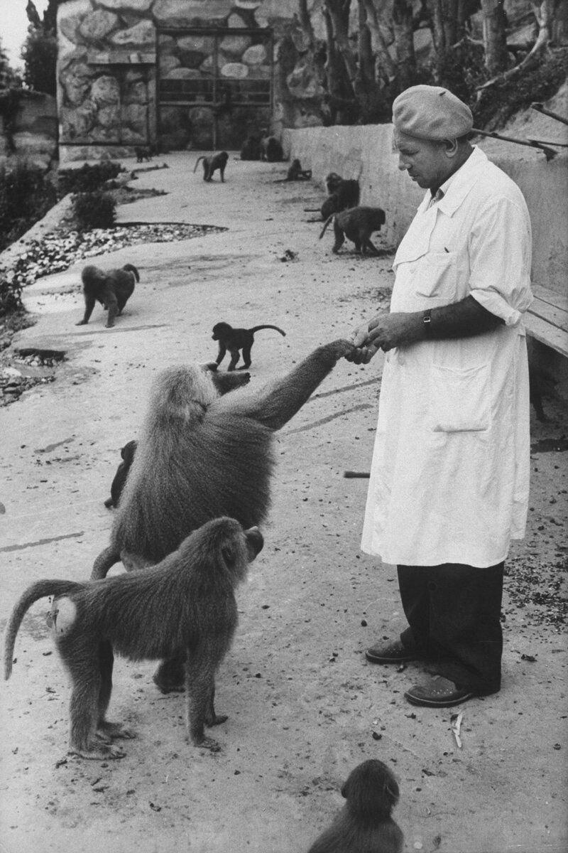 В 1927 году в Сухуми (Столица современной Абхазии) был создан исследовательский центр, где проводились по эксперименты с обезьянами. Там ученые разрабатывали вакцины и антибиотики. Источник изображения: spiegel.de