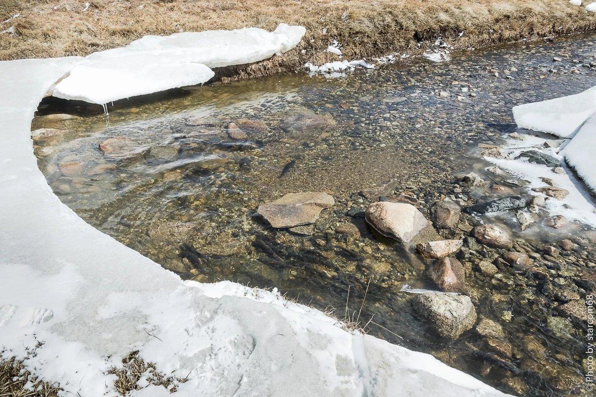 А так? Лучше видно? В общем, когда мы с Белкой встряли при переправе через речку, лед при выходе на него обломился, местная рыба над нами громко смеялась, чем себя и выдала.